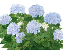 Blue Hydrangeas Watercolor Garden