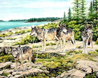 Wolfpack at watch on Scoville Point, Isle Royale National Park