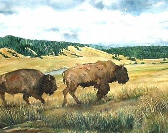 Hayden Valley Bison Yellowstone National Park