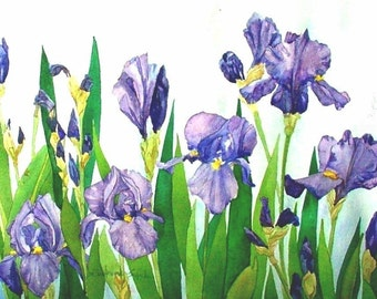 Iris Field Watercolor Reproduction by Wanda Zuchowski-Schick