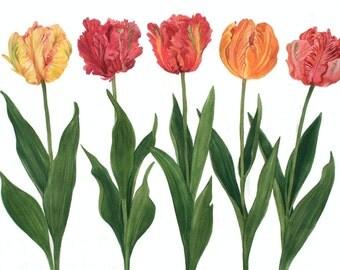 Multi Colored Parrot Tulip Watercolor