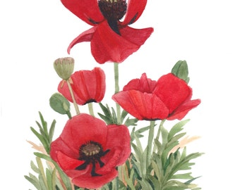 Red Poppy Group Original Watercolor Reproduction