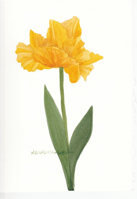 Yellow Parrot Tulip 2 Watercolor by wandazuchowskischick ...