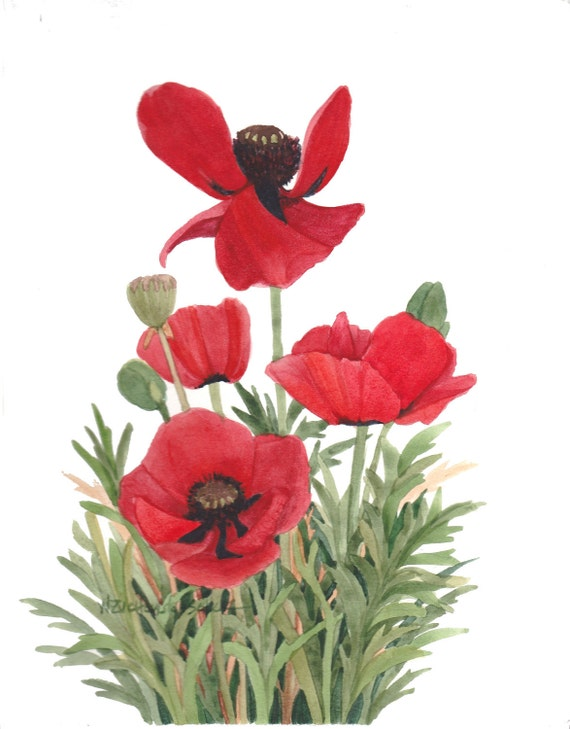 Red Poppy Group Original Watercolor