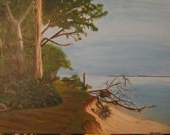 Cumberland Island along the shore