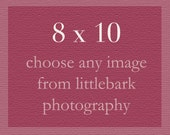 8x10 or 8x12 print of any photograph