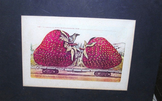 1910 Postcard  Edward Mitchell /  Huge Strawberries on Railroad Car / Signed and Dated / AB2