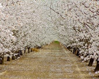 California in Bloom 11 x 14 Photo