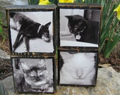 Pet Photo Blocks Personalized with your Dog, Cat, or Any pet - Man's BEST Friend Photos Blocks Set of 4