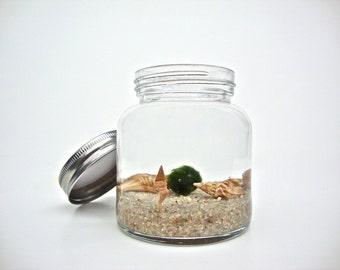 Marimo Moss Ball Glass Jar Aquarium, Underwater Moss Terrarium, Unique Home Decor, Natural Table Decoration, Unique Gift Ideas