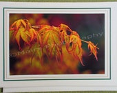 Japanese Maple, Orange & Yellow, Green, All Occasion, Blank Greeting Card, Photo Card