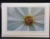 Yellow & White Flower Detail, Birthday, Mothers Day, All Occasion, Blank Greeting Card, Photo Card