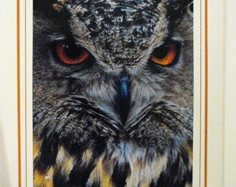 Amber Eyes, Owl, Masculine, Blank Greeting Card, Photo Card