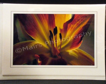 Rust Orange Yellow Day Lily Flower Garden Macro Nature Eco-Friendly Birthday Card, All Occasion, Blank Greeting Card, Photo Card