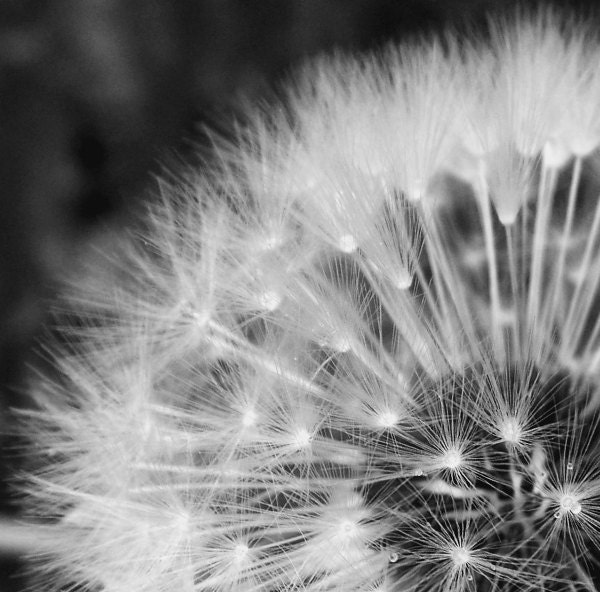 Black And White Macro Flower Photography Flower Plant Macro Photography