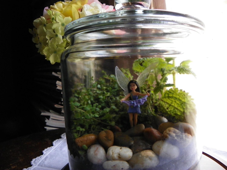 Woodland Fairy Terrarium Kit Small 8 Inch Jar With Lid