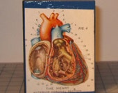 Human Heart  Mixed Media Art    Vintage Anatomy Illustration Art Block     OOAK