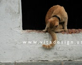 Cat and Yoga  from San Juan / study 1 - Fine Art Photograph, 4x6 matted, ready to frame or use as a greeting card - IN STOCK