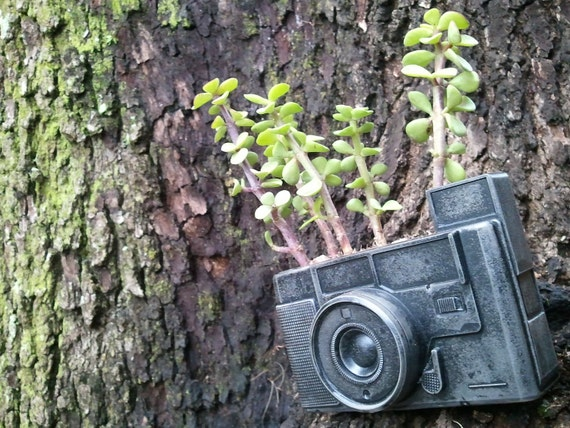 concrete camera fossil planter or other use urban fossil