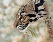 Award Winning Clouded Leopard Wildlife Art