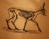 Deer Skeleton Patch