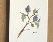 lilac watercolor sketch
