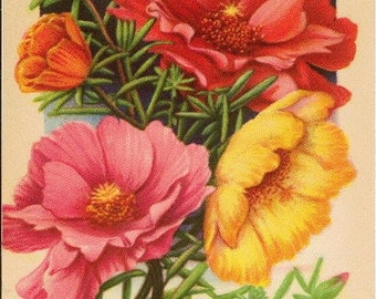 PORTULACA Vintage Tucker's Flower Seed Packet Lithograph from Carthage Missouri