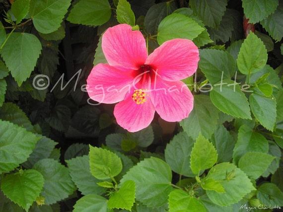 "Photography Print- ""Full Bloom"""