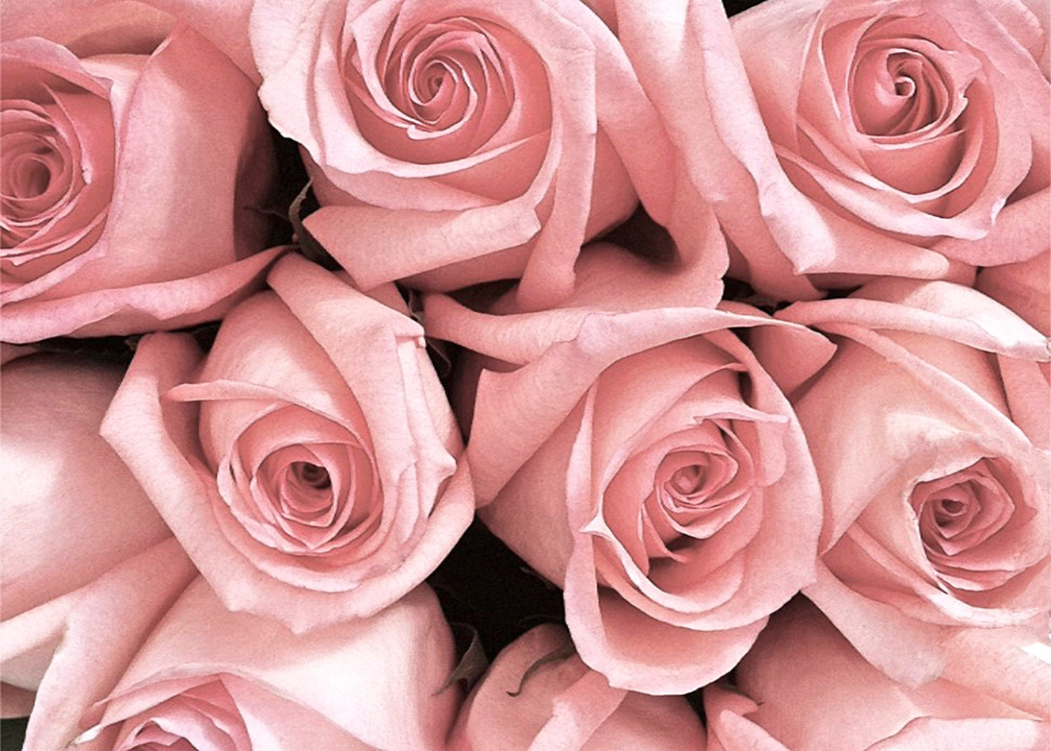 Items similar to Pink Roses Bouquet Flower Romance Dreamy ...