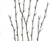 "Original Painting, Pussywillow Nature Art, Spring Pussywillows Botanical, Brown Branches, Twigs, Gray Rain, Grey, Home Decor, 8"" X 10"""