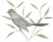 "Original Bird Painting, Gray Catbird Illustration, Nature Wall Art, Original Wildlife Painting, Bird Art, Grey and Green, Gouache 8"" X 10"" - ABFoleyArtworks"
