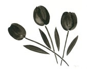 Abstract Flower Painting, Black Tulip Original Watercolor, Black Flowers, Black and White Home Decor, Abstract Flower Art, Tulip Art, 8 X 10
