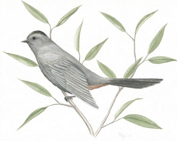 "Original Bird Painting, Gray Catbird Illustration, Nature Wall Art, Original Wildlife Painting, Bird Art, Grey and Green, Gouache 8"" X 10"""
