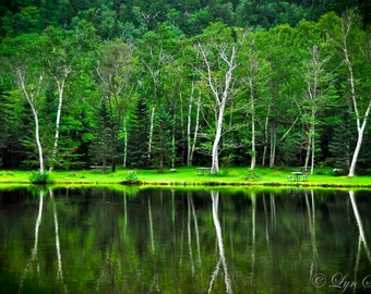 Reflections -  Nature photography, landscape photography, spring, pond, lake, fine art print, trees, new england