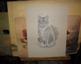 Primitive sketching of kitten...
