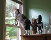 What's Out There / Cat Blank Photograph Greeting Card