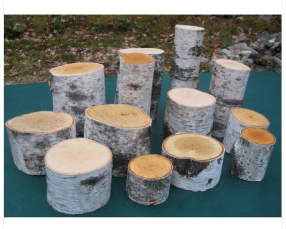 Native maine white birch log pieces for crafting 12 to 15 pcs for White birch log crafts