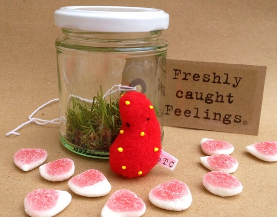 Freshly Caught Feelings : Fruity