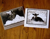 Assortment Variety Pack of Bulls and Baby Calf Western Note Cards in Sepia with Humor