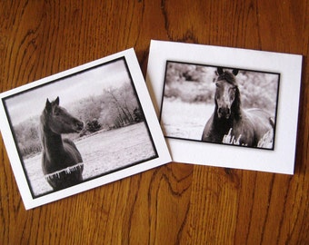 Double Pack Black and White Western Horse Assortment/DAncing Horse Set of 6 Cards
