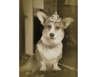 Corgi Photo, British Royal Family, Dog Photograph, Funny Shop Window, Pet Photography, Crown