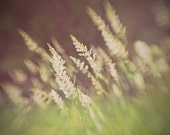 Dreamy Haunted meadows nature fine art abstract photography field grasses greens 8x10