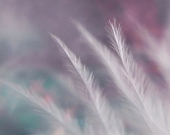 breathe feather macro white purple blue pink valentines surreal dreamy star bokeh abstract fine art photograph home decor 8x10