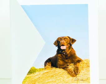 Chocolate lab, hunting dog, brown, greeting card, photographic, hay bale, handmade, blank, vertical