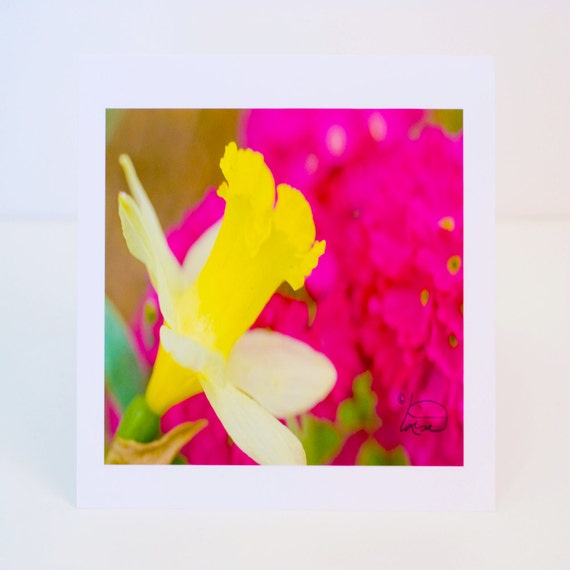 Daffodil, Spring, Flower, Pink Flower, Greeting Card, Photographic, Handmade, Blank, Paper, Horizontal