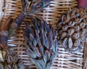 Naturally Dried Magnolia Seed Pods