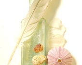 how you shine: antique smartweed bottle, silver feather, sea urchin, and shell