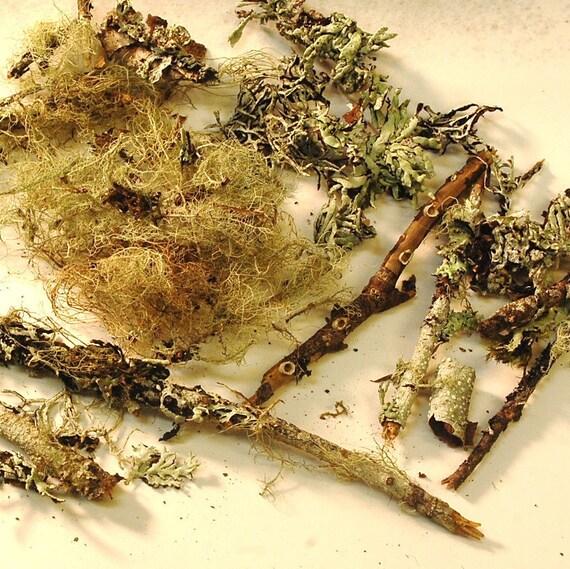 dry lichen specimens