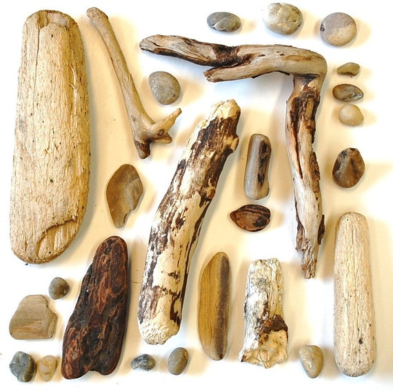 driftwood, agates, and pebbles: natural history collected lot