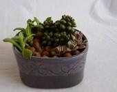 mini Dish Garden (dish only)
